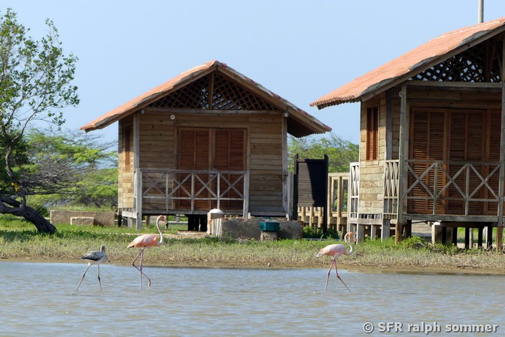 Rosa Flamingos vor Bungalows